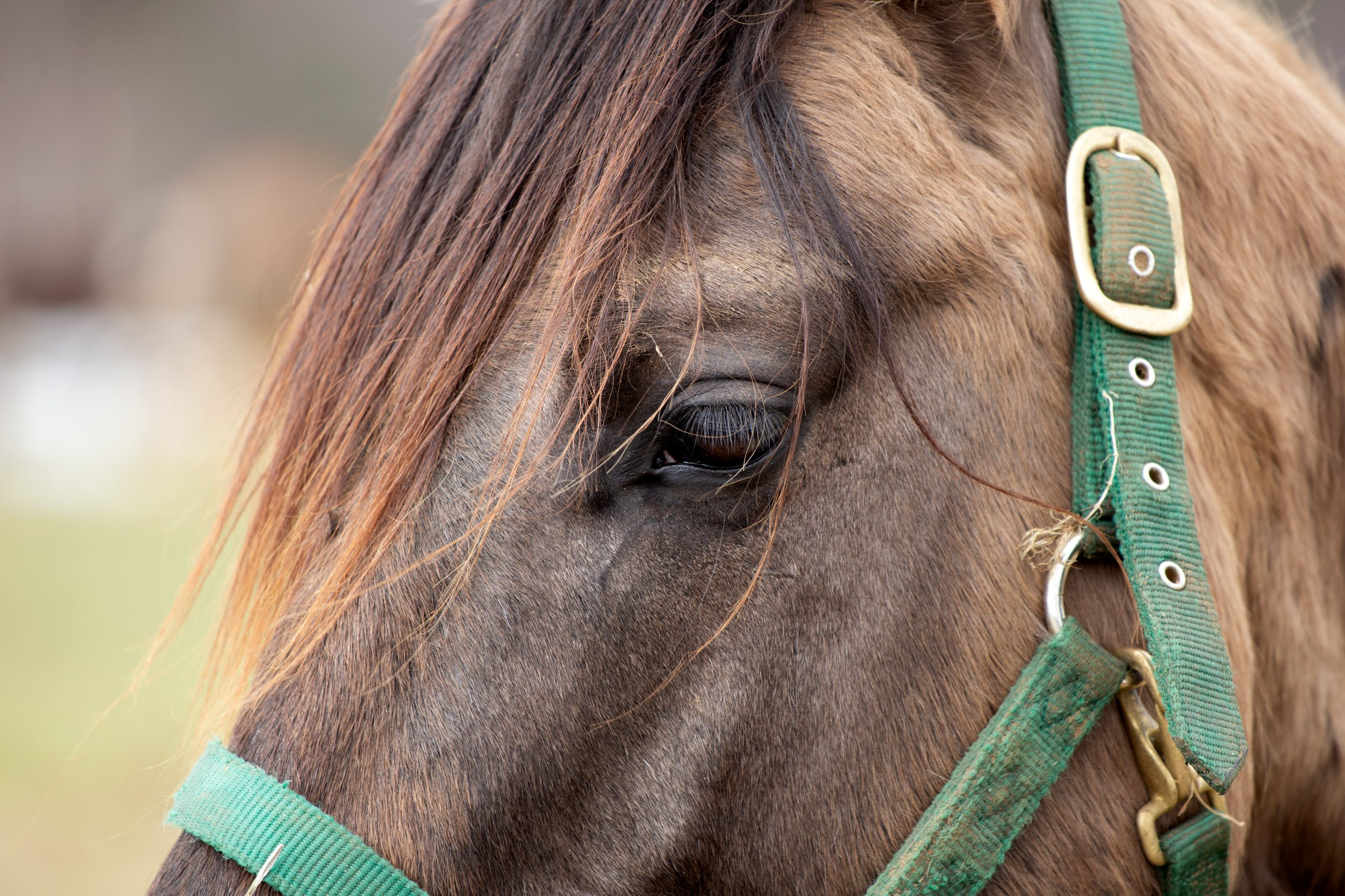 Ivermectin is good for horses, bad for COVID-19 patients.